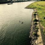 Rhein mit Pollerwiesen