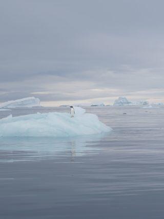 Pinguin, der die Stille genießt